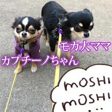◆始祖犬モカちゃんからつながる一番古い母系の比較◆