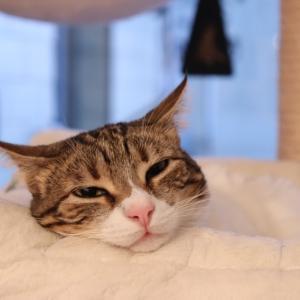 とろんとろんの Melty Cat イチゴちゃん♪