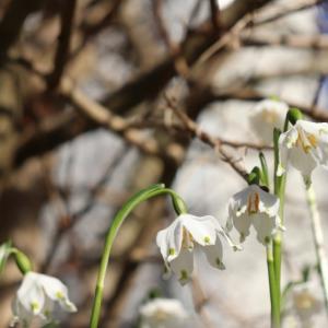 スイス的 春の芽吹き♪と 新型コロナウィルス続報