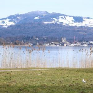 スイス的 チューリッヒ湖は野鳥の楽園♪