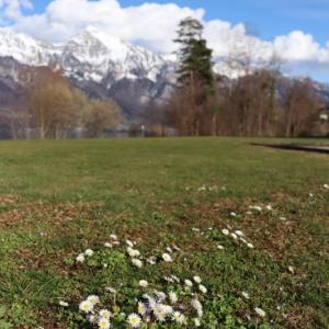 スイス的 春の訪れを待つWalensee★ と新型コロナウィルス情報