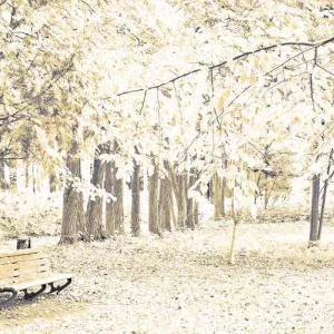 秋のスケッチ♪