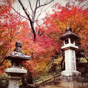 秋の紅葉 iPhoneで美しく撮る方法 in 長谷寺