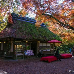 ぶらっと奈良散策(奈良県)