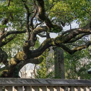 里山の信仰と古道(大阪府)