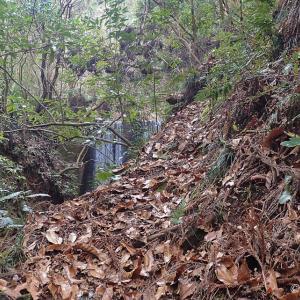 権現川から桜池へ