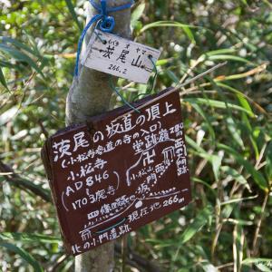廃小松寺の参道を辿る