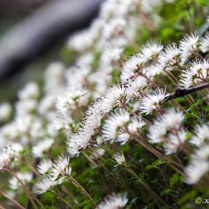 早春の花を愛でに谷道へ