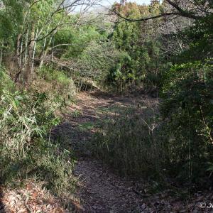 河内飯盛山/黒廻池(くろまのいけ)