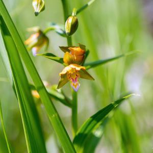 自然休養林に咲く花(金勝アルプス)