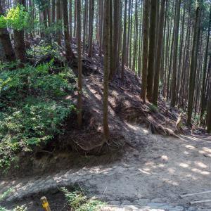 水ヶ阪尾根(金剛山)