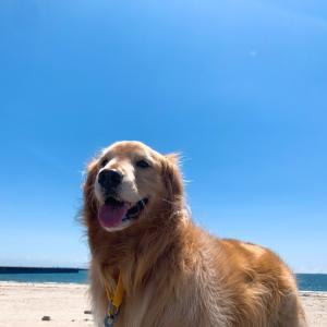 にこり♪海に行ったよ♪