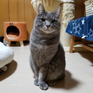 人気の猫雑貨続々(*^^*)