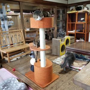 串団子キャットタワー(●´ω`●)