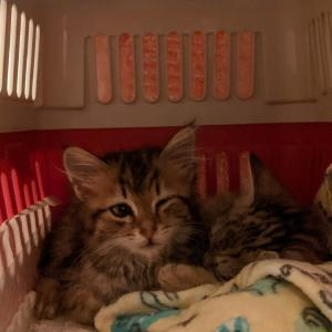 保護した子猫たち