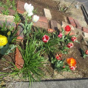 花壇が華やかです