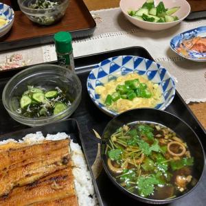鰻丼、崩し卵豆腐、きゅうりとワカメ、じゃこの梅酢和え、赤だし