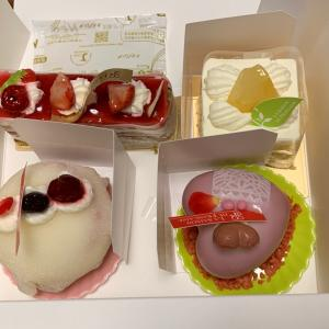 誕生日祝と、桜ちゃんの居場所