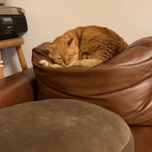 檀さん、クッションに寝る