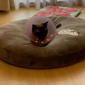 猫界のミッチーと、在宅ご飯