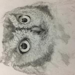ニシアメリカオオコノハズク