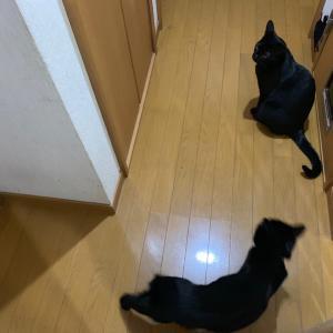まりのちゃん、りここちゃん、たいちくんのお留守番のお手伝い3日目最終日♪