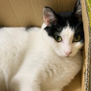 猫専門ペットシッター ユキにゃんママ、再開準備に入りました!
