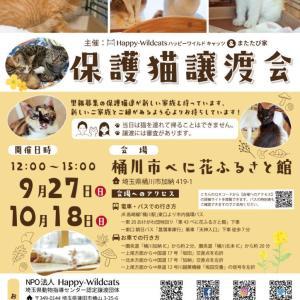 またたび家のシェルターボラ*猫さん達の紹介725 & 譲渡会のお知らせ