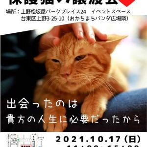 またたび家のシェルターボラ*猫さん達の紹介949 * 明日17日は譲渡会2か所あります