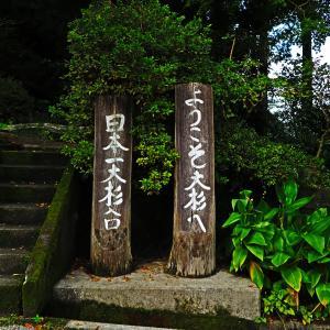 【杉の大杉】 高知から淡路島への移動中