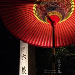 六義園のライトアップ ~夜桜~