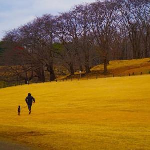 森林公園でジョギング
