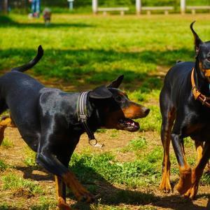 ボールの取り合い LUCA&ライリー
