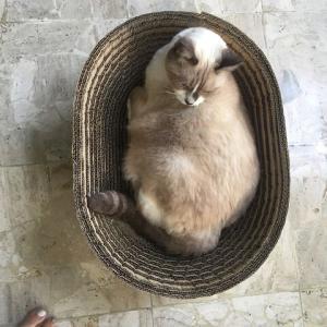 とてもEcoな猫ベッド − 段ボール工作