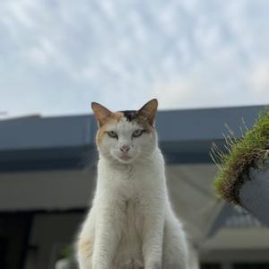 近所のたまちゃん