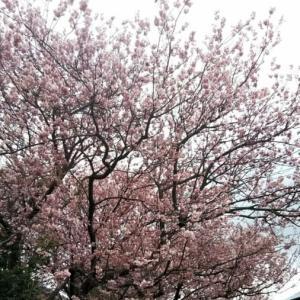 🐵 ひそやかな春