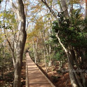 済州島 西帰浦自然休養林で癒される。