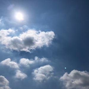 夏の空とセミの鳴き声