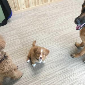 畜犬登録に行ってきました。