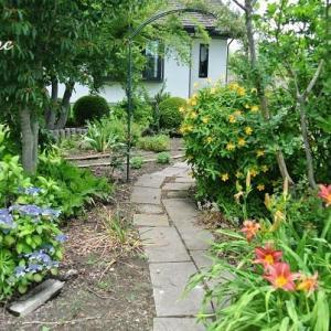 最近の庭の様子