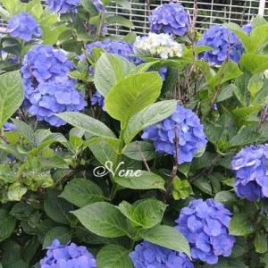 青い花と・・・
