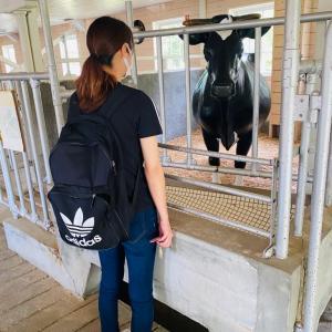 牛さんに会いました🤣 トータルカーズワークスブログ