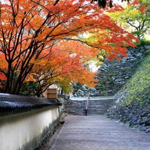 【2019】紅葉は散り際が一番美しい