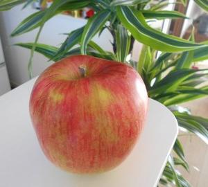 りんごを買うならシナノスイートがおすすめ!!