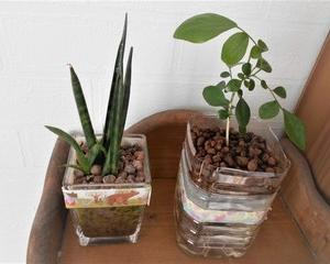 植物育成LEDライトで室内での日光不足を解消