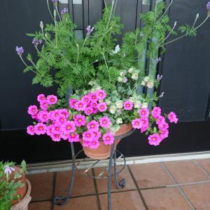 お客様の寄せ植えご紹介♪梅雨の合間の日差しと色とりどりの寄せ植えに目から癒しを吸収♪
