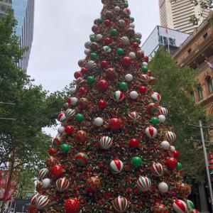 豪・コアラがクリスマスツリーにぶら下がって...