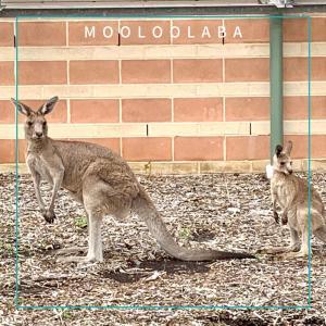 オーストラリアでお仕事GET!社会人の留学は活かされることがいっぱい