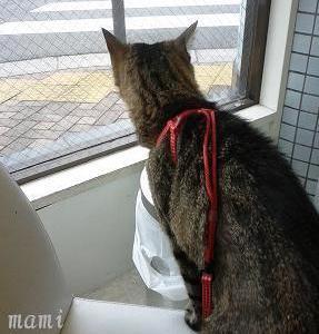 姉猫さんの病院。