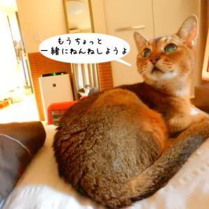 モヤモヤしても猫に癒されてまっす。